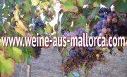 weine-aus-mallorca.com - November in Weiss