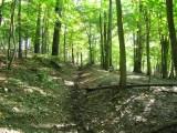 Ich glaub' ich steh' im Wald