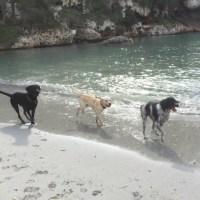Überblick Hundestrände auf Mallorca