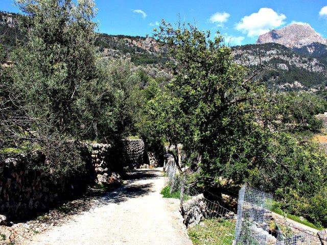 Einer der Wege durch das Tal der Orangen