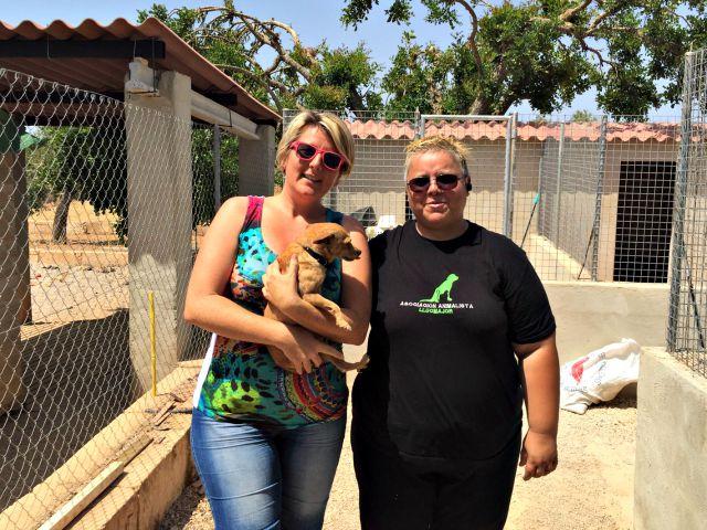 Hunde auf Mallorca adoptieren