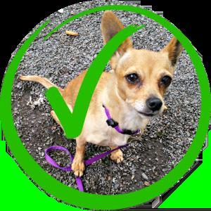 Hunde generell erlaubt