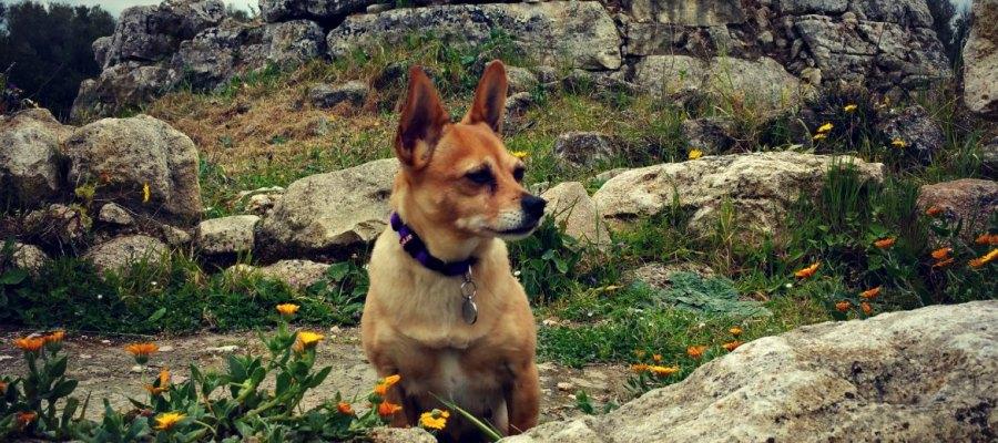 Elfie von Mallorca Talks besucht Mallorcas Ureinwohner wohnten in Talayots