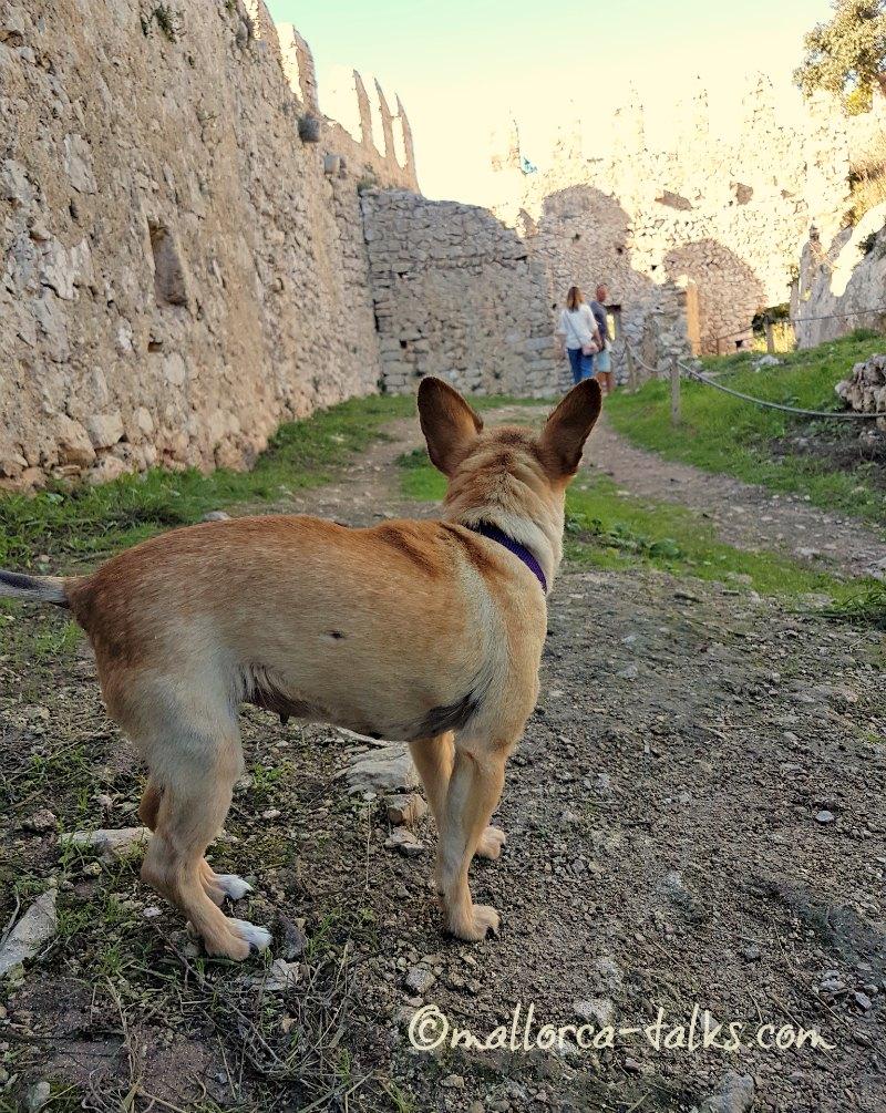 Hunde sind erlaubt im Castell de Santueri