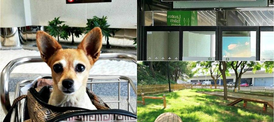 Angebote für Hunde am Flughafen Palma