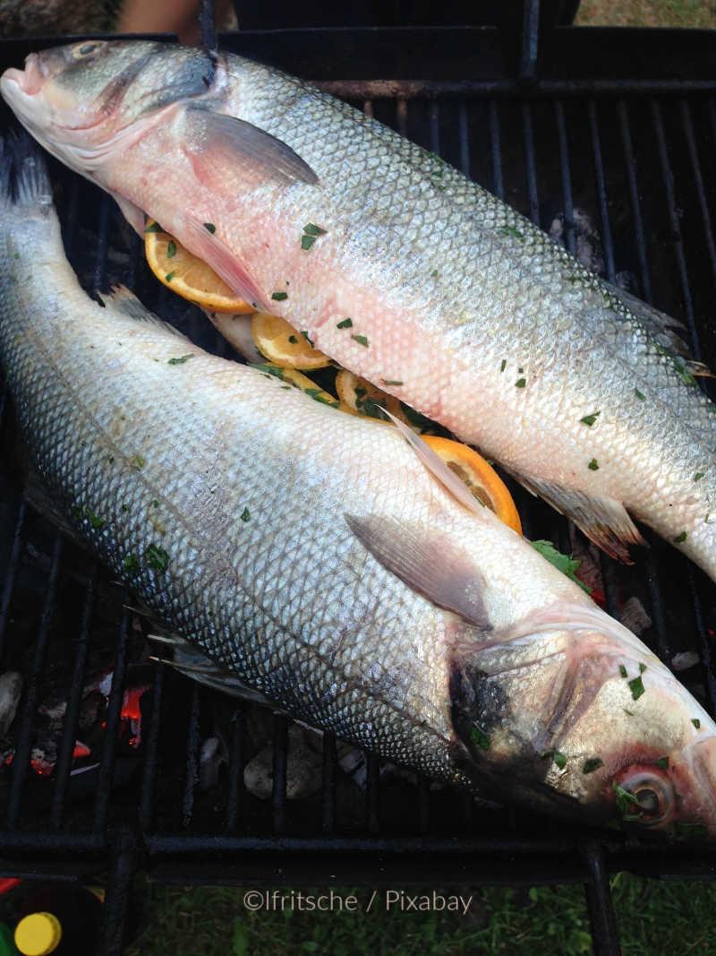 Mittelmeer leergefischt Lubina