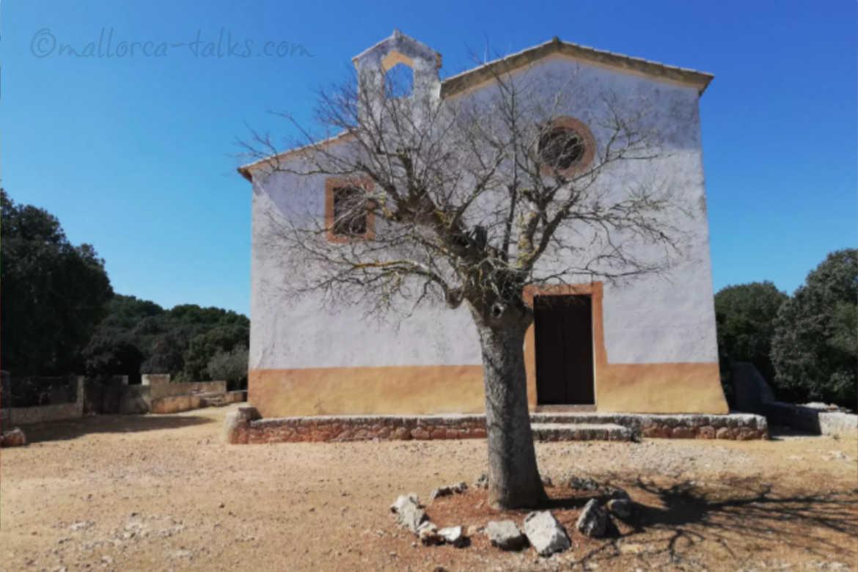 Esporles Ermita - der weiße Baum