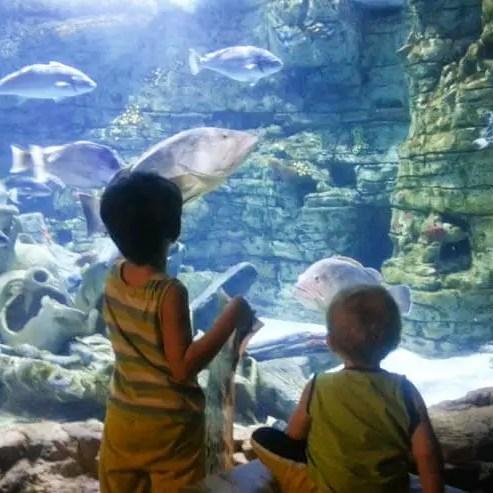 Aquarium in Colonia de Sant Jordi - Besucherzentrum Cambrera