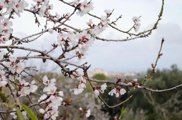 Mallorca im Februar