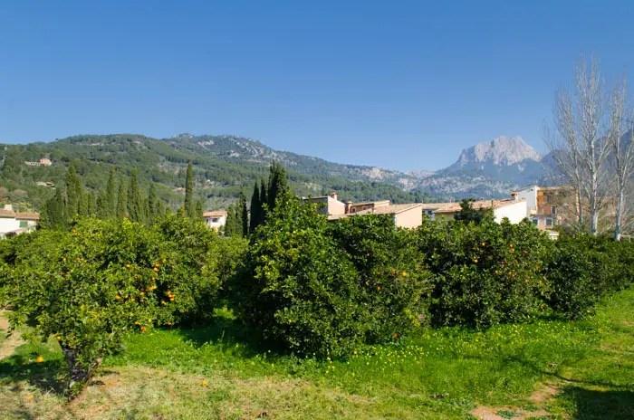 Orangengarten in Sóller, Mallorca