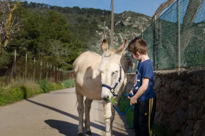 Wandern mit Esel auf Mallorca - Mallorca Urlaub 2021