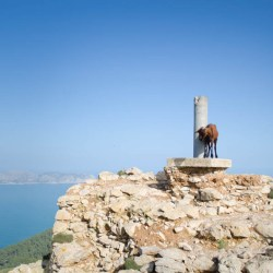 Wandern zur Talaia d'Alcudia