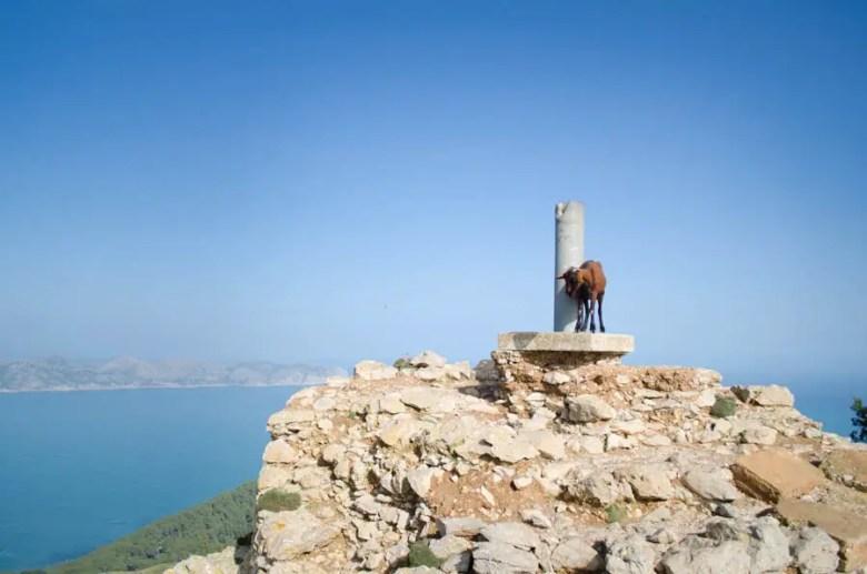 Wehrturm Talaia d'Alcudia
