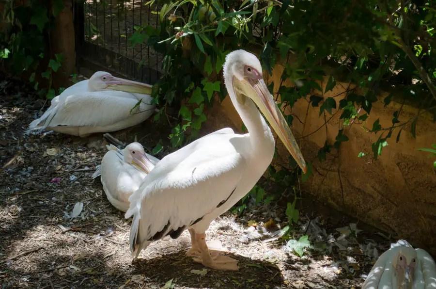 Normalerweise meiden wir Zoos. Denn viel lieber als eingesperrte Tiere sehen wir diese in ihren natürlichen Lebensräumen. Aber der Natura Parc in Santa Eugenia ist anders. Denn der Tierpark auf Mallorca ist ein Tierasyl für geschundene Tiere.