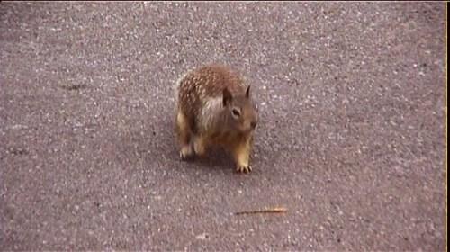 Squirrel near San Simeon @ Tolfalas.com