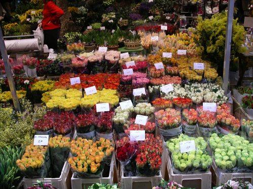 Amsterdam Flowers @ Tolfalas.com