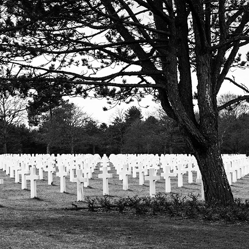 field of crosses under a tree