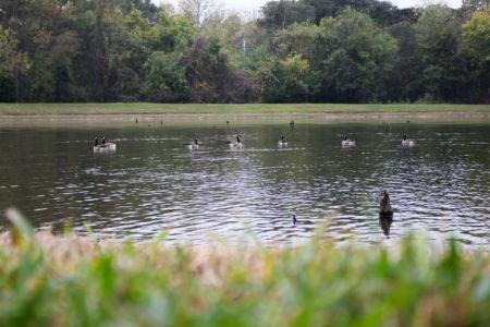 Malouf Pond