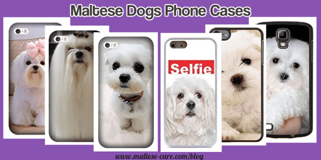 Maltese dogs phone cases