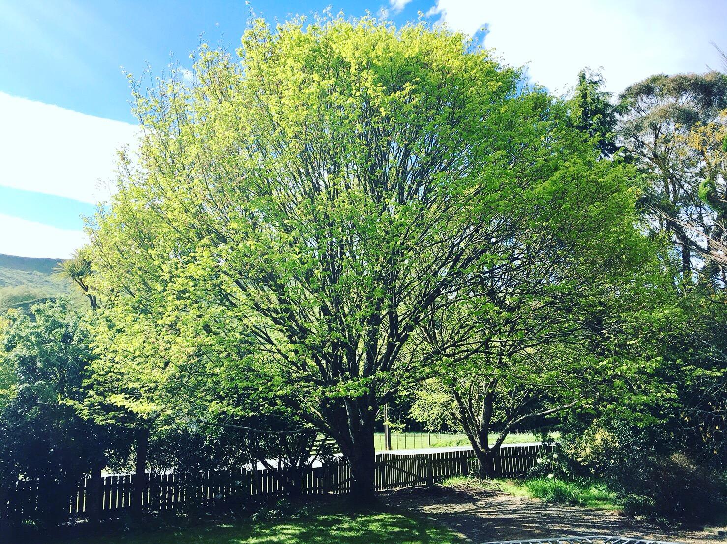 ニュージーランドの新緑