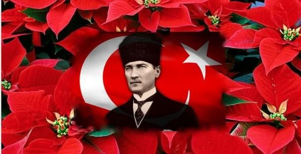 Ataturk Cicegi Poinsettia euphorbia