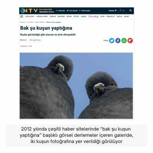 bakın şu kuşun yaptığına