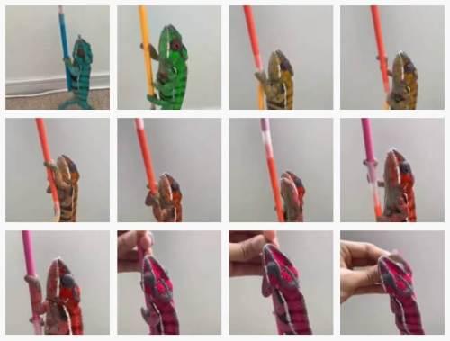 bukalemun renk değiştirme videosu