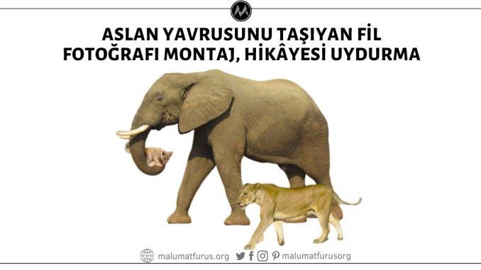 Filin Yavru Aslanı Taşıdığı ve Anne Aslanın Eşlik Ettiği Fotoğrafın Yılın Fotoğrafı Seçildiği İddiası 1 Nisan Şakası, Görsel Montaj, Hikâyesi Uydurma