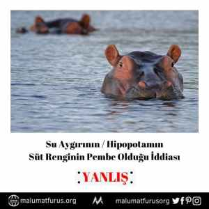 hipopotam süt rengi pembe değil