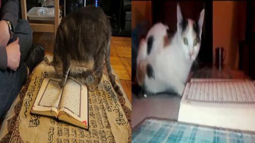 kedi kurana bastı