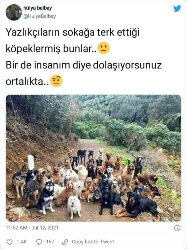 sokağa terk edilmiş köpekler