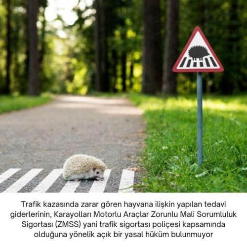 trafik sigortası hayvan tedavi masrafları