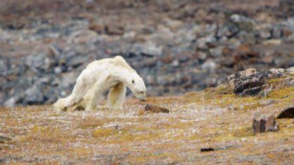 Capire il cambiamento climatico - La mostra del National Geographic