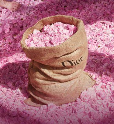 Le rose di Grasse per Dior