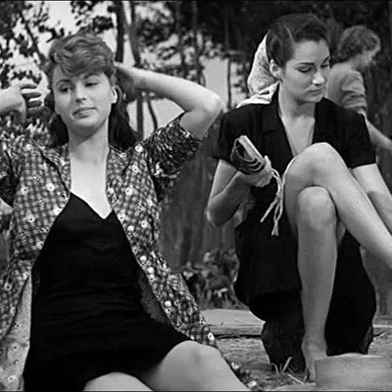 Vittorio Gassman i migliori film