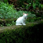 Pets and Plants – Poisoning