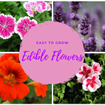 Edible Flowers that are Easy to Grow