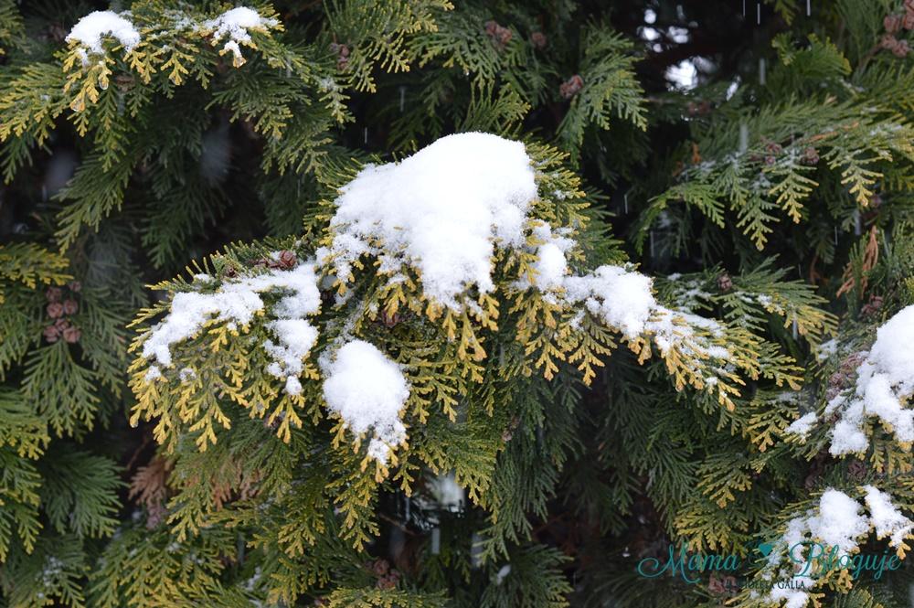 śnieg4