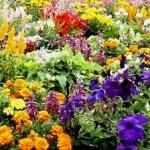 help-with-gardening