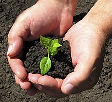 organic-gardening-hands