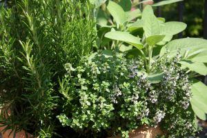 garden-herbs