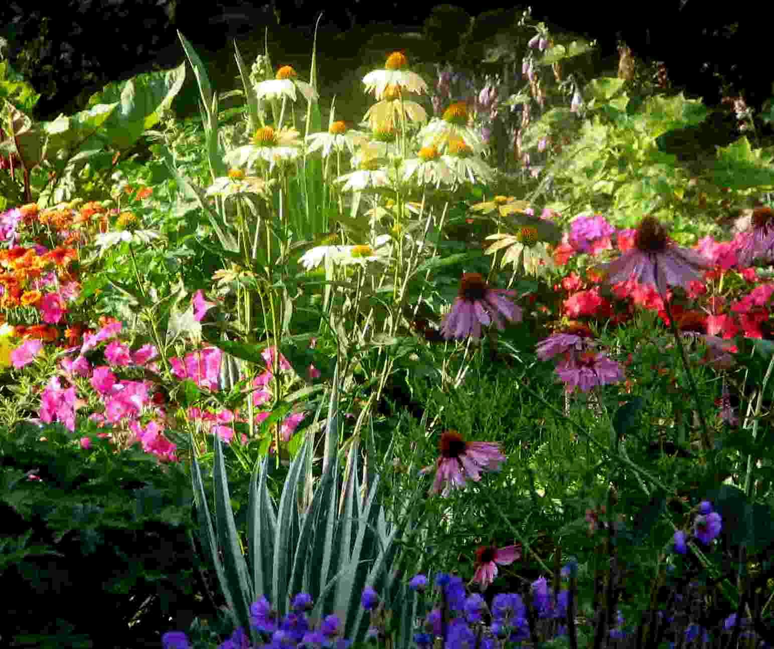Perennial garden design for Perennial garden design zone 9
