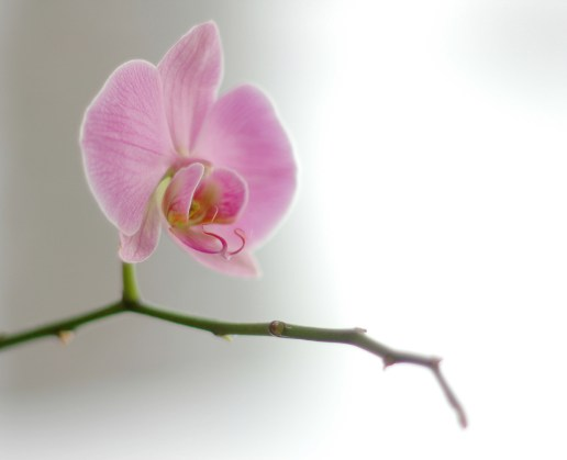 Orchid courtesy of Atle Brunvol via Flickr