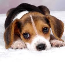puppy diarhea