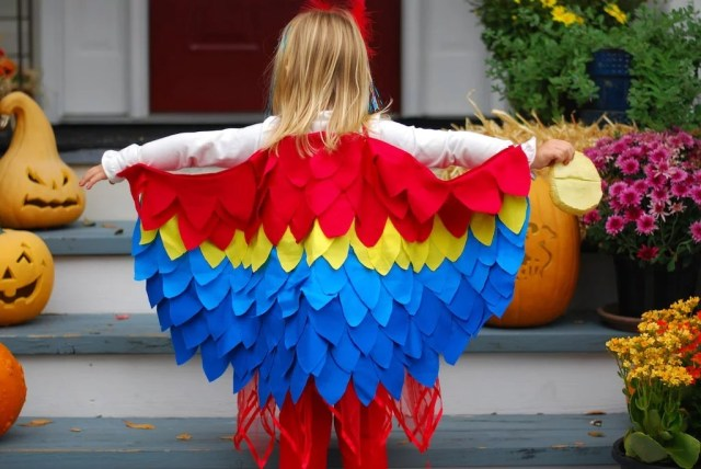 Image result for how to dress your parrots during halloween