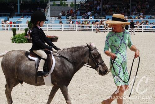 devon horse show 2011 i