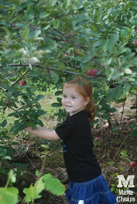 lily picking apples