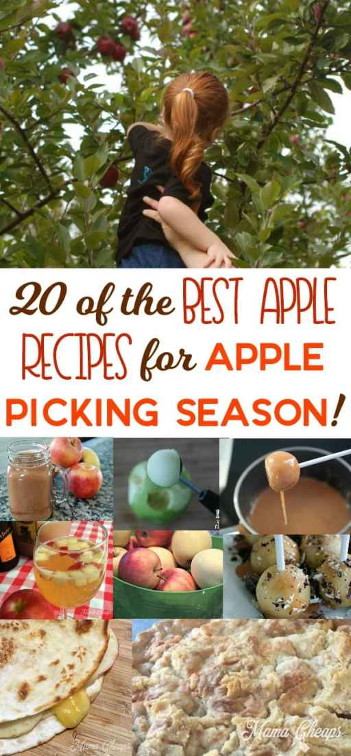the Best Apple Recipes for Apple Picking Season