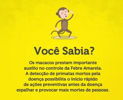 infografico - febre amarela - macacos