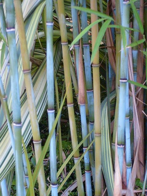 Le Bambou La Touche Dco Au Jardin Blog Ma Maison Mon